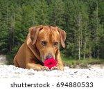 a dog  rhodesian ridgeback with ... | Shutterstock . vector #694880533