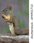 red squirrel sitting on old log ... | Shutterstock . vector #694901713