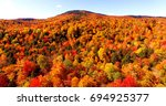autumn foliage in maine forest...