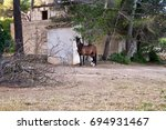 Horse Beside An Old Finca