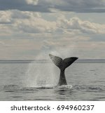 southern right whale tail | Shutterstock . vector #694960237