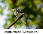 dragonfly | Shutterstock . vector #695006497