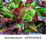 Colorful Leaves Of Garden...