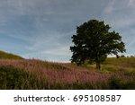 oak tree among rosebay... | Shutterstock . vector #695108587