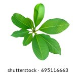 top view of the small plant ... | Shutterstock . vector #695116663