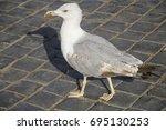 Seagull On A Cobblestone Road...