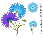 blue flower cornflower isolated ... | Shutterstock . vector #695249023