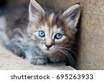 little kitten outdoor  ... | Shutterstock . vector #695263933
