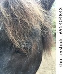 Small photo of Macro picture of a miniature horse focusing on his eye and forelock.