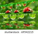 Three Ladybugs Running On A...