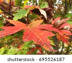 leaves in the fall | Shutterstock . vector #695526187