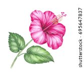 hibiscus flower isolated on a... | Shutterstock . vector #695647837