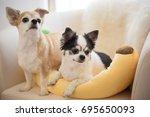 chihuahua dog | Shutterstock . vector #695650093