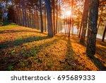 sun rising in pine wood of pang ... | Shutterstock . vector #695689333