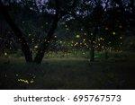firefly flying in the forest.... | Shutterstock . vector #695767573