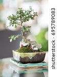 Small photo of Bonsai plants, amine kg ball two are trying to find food to eat.
