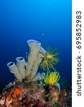 Small photo of Tube sponge (Porifera) with colorful feather stars on a coral reef