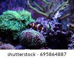 popular saltwater fish in... | Shutterstock . vector #695864887