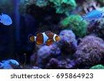 popular saltwater fish in... | Shutterstock . vector #695864923