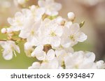 blossoming of the apricot tree... | Shutterstock . vector #695934847