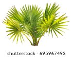 young betel palm on isolate... | Shutterstock . vector #695967493