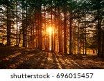 beautiful forest landscape ... | Shutterstock . vector #696015457