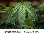 Cannabis Leaf Dew Drops