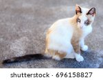 feral cat is a cat that has... | Shutterstock . vector #696158827