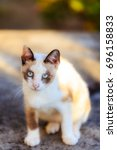 feral cat is a cat that has... | Shutterstock . vector #696158833