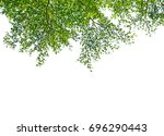 green leaf and branches on