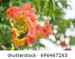 cute bird olive backed sunbird... | Shutterstock . vector #696467263