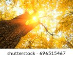 fallen leaves in autumn forest | Shutterstock . vector #696515467