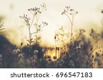 view of tropical forest field... | Shutterstock . vector #696547183