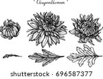 chrysanthemum  illustration on... | Shutterstock .eps vector #696587377
