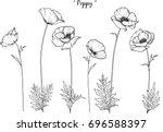 Poppy  Illustration On White...