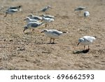 seagull on the azov beach in... | Shutterstock . vector #696662593