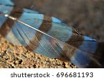 closeup details of a striped... | Shutterstock . vector #696681193
