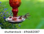 Green Hummingbird At Red Feede...