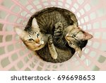 Small photo of two adorable Cats lying in basket. Lovely Couple family friends sisters time at Home. kittens cuddle snuggle together.