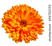 Calendula Are Also Known As...