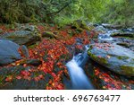 Green Creek Red Maple   The...