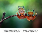 Tree frog  flying frog