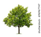 isolated tree on white... | Shutterstock . vector #696967747