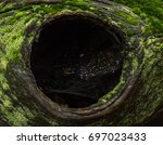 tree hole | Shutterstock . vector #697023433