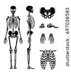 vector silhouette of human... | Shutterstock .eps vector #697038583