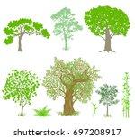 decorative deciduous trees... | Shutterstock . vector #697208917