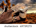Iguana At Sunset Sitting On An...