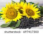 sunflower seeds | Shutterstock . vector #697417303