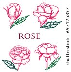 rose   flower   vector set... | Shutterstock .eps vector #697425397