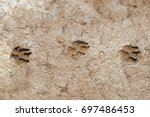 dog paw prints in mud. | Shutterstock . vector #697486453